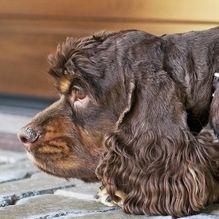 Kutya feje oldalról S–Bordatávolság mintás Alutech CLASSIC garázskapu előtt